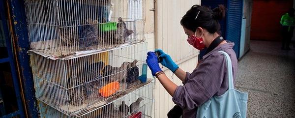 IPES apoya acciones para eliminar la venta de animales vivos en las Plazas Distritales de Mercado